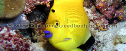Best diving from Phuket on our private speed boat with Searunnerspeedboat.com.